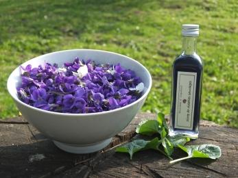 couleurs et saveurs de la petite violetfe sauvage,