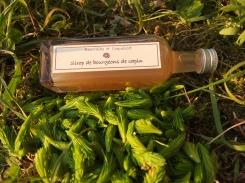 bourgeons vert tendre et acidulés, un concentré de fraîcheur printanière, avec ce délicieux goût de sapin...
